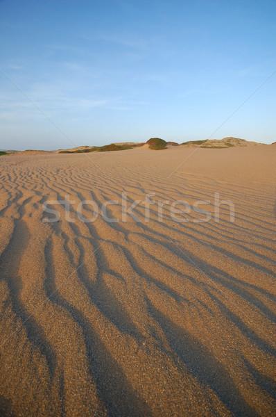 sand dunes Stock photo © marcopolo9442