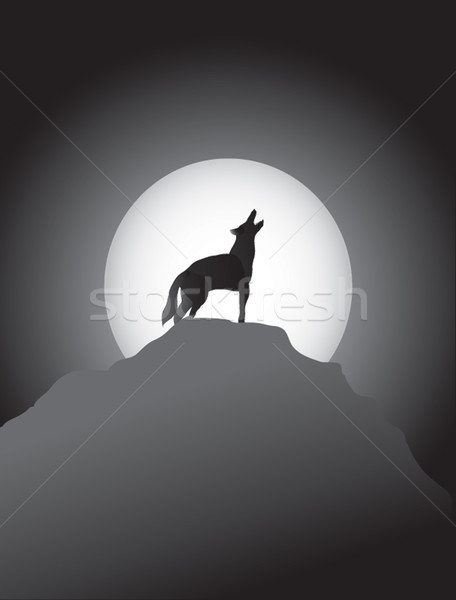 Coyote Howling at the Moon Stock photo © marcopolo9442