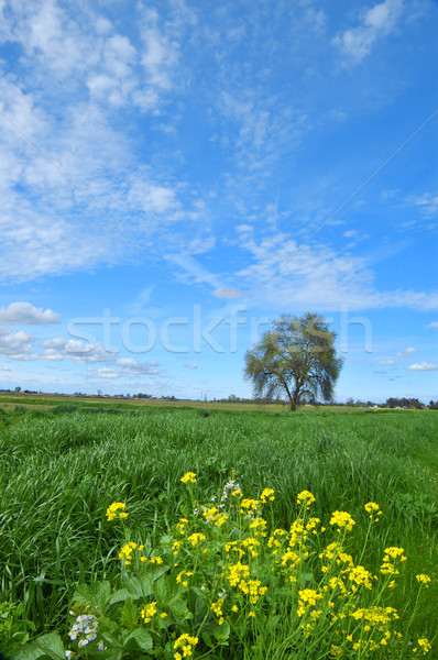 springtime landscape Stock photo © marcopolo9442