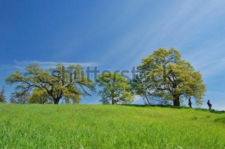 Chêne printemps personnes herbe premier plan ciel Photo stock © marcopolo9442