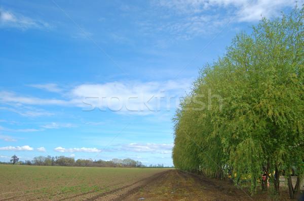 rural countryside Stock photo © marcopolo9442