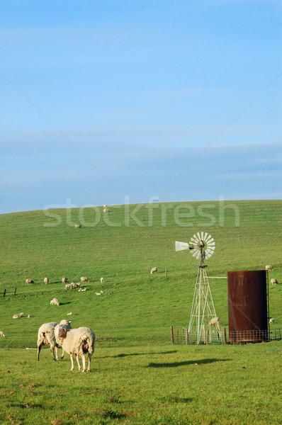 Birka domboldal áll tavasz mező zöld Stock fotó © marcopolo9442