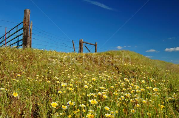 springtime meadow Stock photo © marcopolo9442