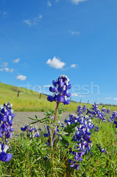 Forest of wildflwers Stock photo © marcopolo9442