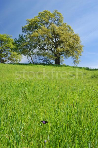 Dąb wiosną trawy Motyl pierwszy plan niebo Zdjęcia stock © marcopolo9442