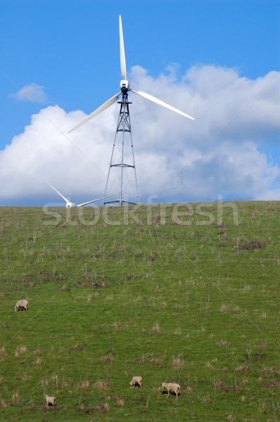 Ovejas ladera pie molino de viento primavera campo Foto stock © marcopolo9442