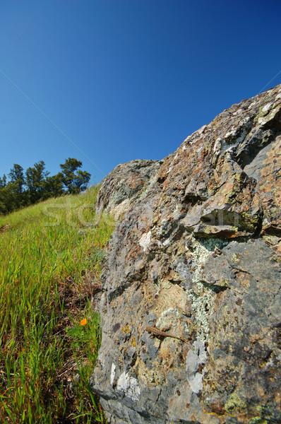 Mt Tamaplais Lizard Stock photo © marcopolo9442