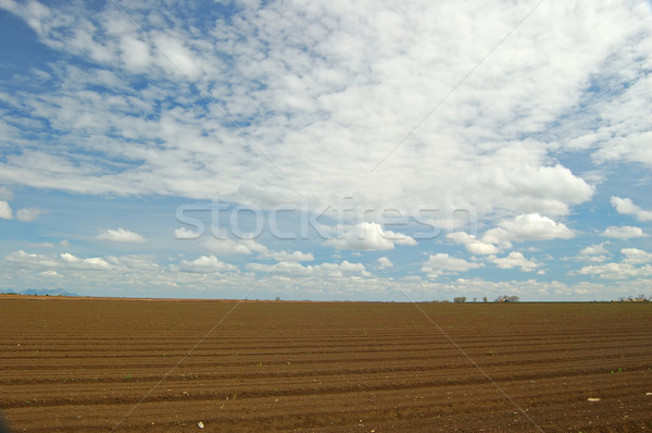 agricultural field Stock photo © marcopolo9442