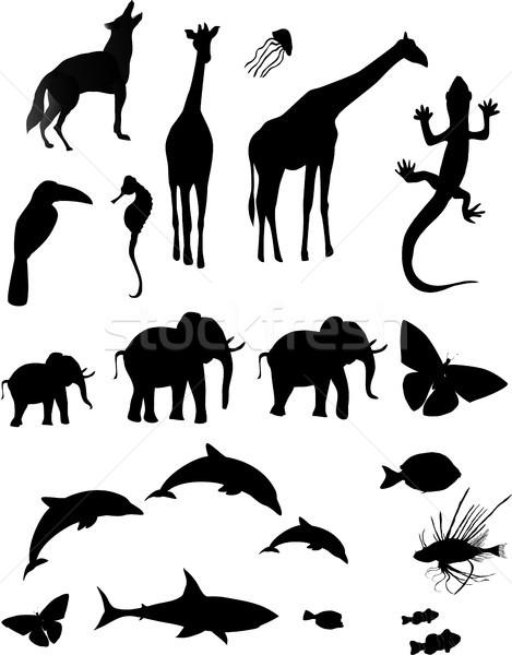Animal Silhouette Stock photo © marcopolo9442