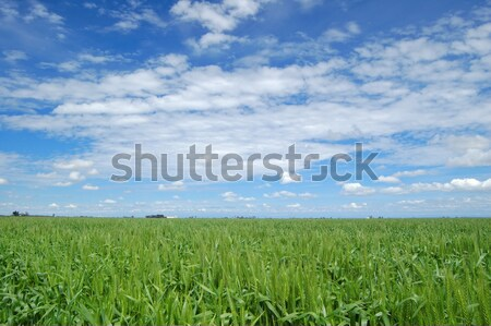 spring field Stock photo © marcopolo9442
