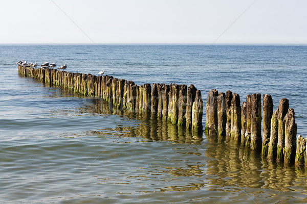 Old wooden breakwater in Baltic Sea  Stock photo © marekusz