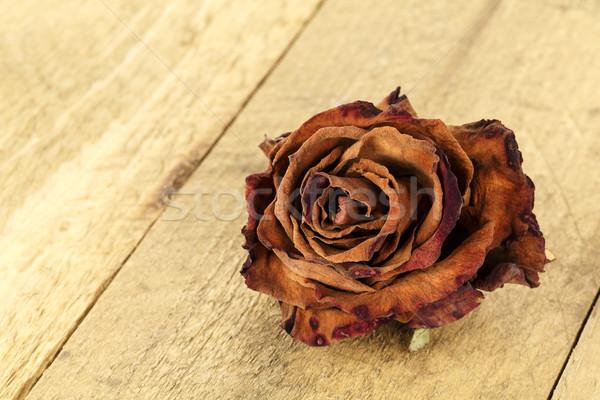 Kurutulmuş çiçek gül lekeli ahşap Stok fotoğraf © marekusz