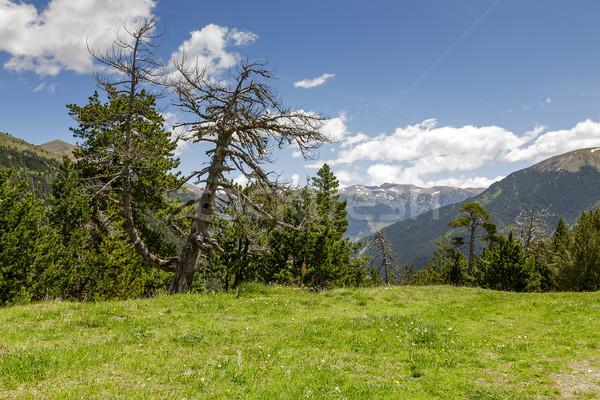 Természet száraz fa bájos hegyek kilátás Stock fotó © marekusz