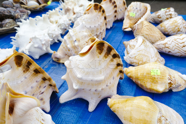 Stock photo: Seashells collection put up for sale
