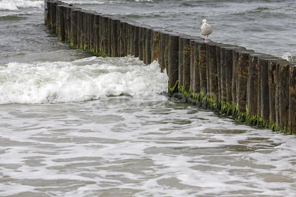 Wooden breakwaters by the Baltic sea Stock photo © marekusz