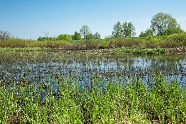 wetlands Stock photo © marekusz