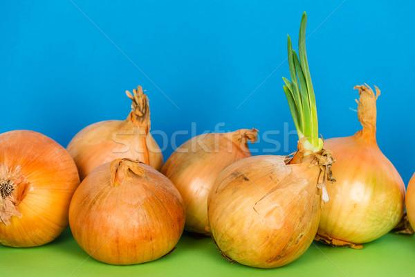 Onions and green shoots  Stock photo © marekusz