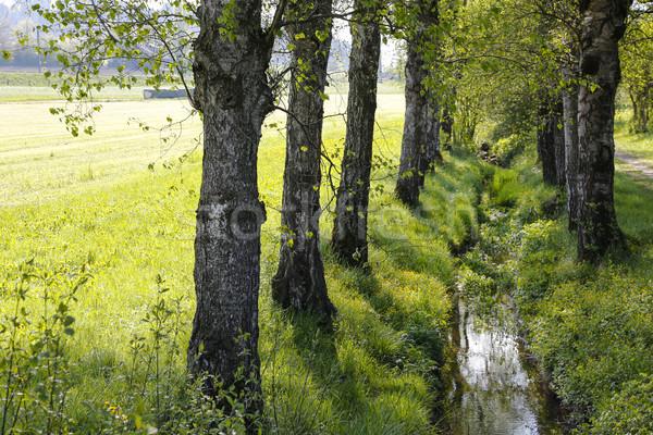 Keskeny folyam nő folyik fű fa Stock fotó © marekusz