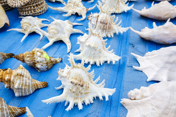 Seashells put up for sale  Stock photo © marekusz
