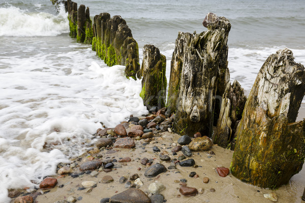 Very old wooden breakwaters Stock photo © marekusz