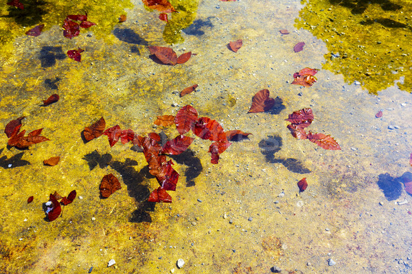 Fallen leaves on the water Stock photo © marekusz
