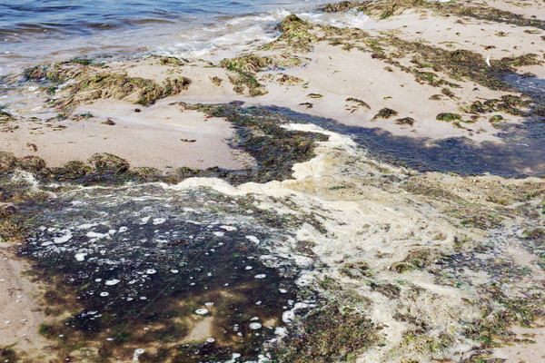 Stock photo: Polluted water on the sea shore