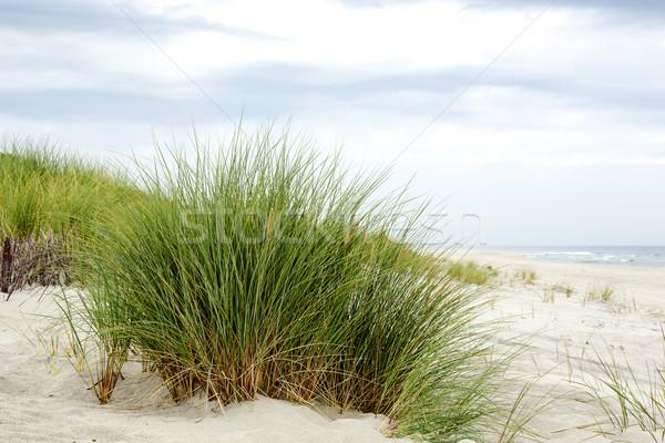 Grama mar báltico costa céu paisagem mar Foto stock © marekusz