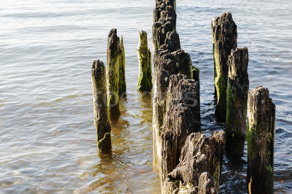 Old and partially rotted wooden breakwaters Stock photo © marekusz