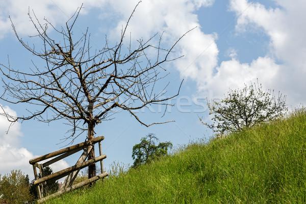 Tree on a slope Stock photo © marekusz