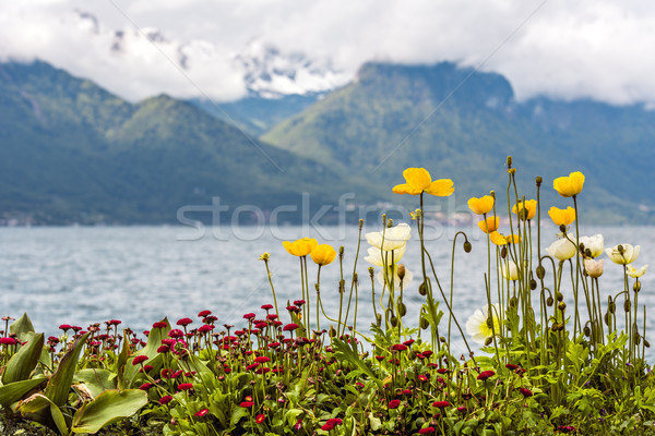 Flowers adorn the promenade in Montreux Stock photo © marekusz