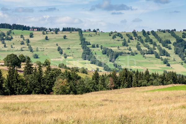 summer landscape of the area surrounding Zakopane Stock photo © marekusz