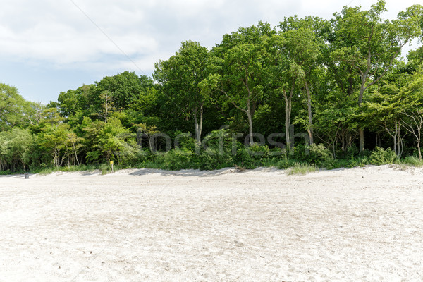 Trees and bushes grow on a sand dune in Kolobrzeg Stock photo © marekusz