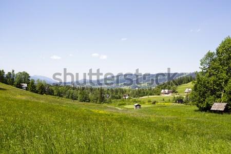 Meadows, forests and fields in Zakopane Stock photo © marekusz