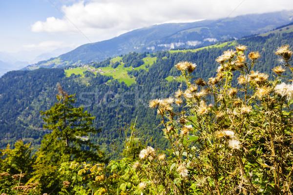 Száraz nyár zöld növény legelő mag Stock fotó © marekusz