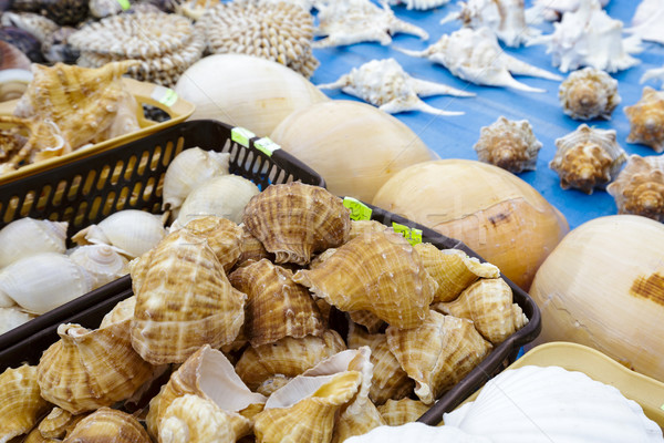 Various seashells put up for sale Stock photo © marekusz