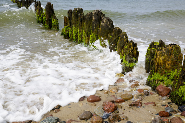 Old and rotten wooden breakwaters Stock photo © marekusz