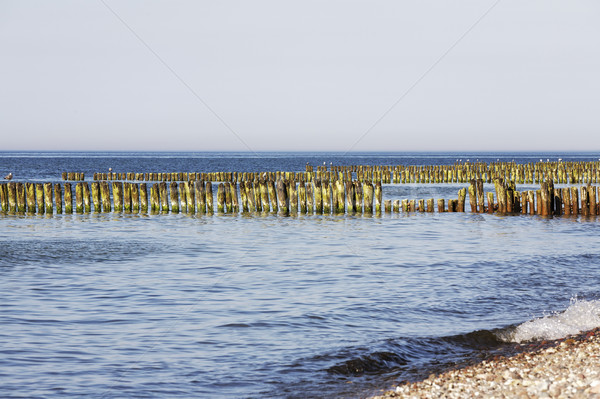 Partially rotted wooden breakwaters in sea waters Stock photo © marekusz