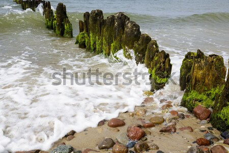Old wooden breakwaters Stock photo © marekusz