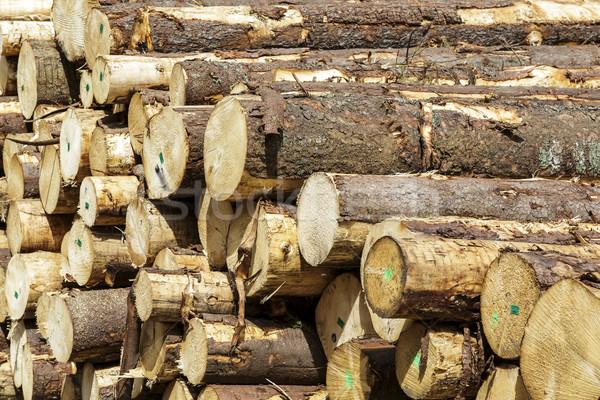 Freshly cut tree logs piled up Stock photo © marekusz