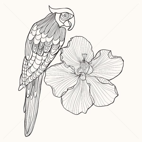 Parrot exotic bird with flower hibiscus Stock photo © Margolana