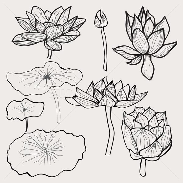 Ayarlamak güzel tek renkli lotus çiçekler Stok fotoğraf © Margolana