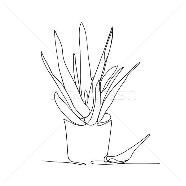 линия рисунок алоэ банка вектора белый Сток-фото © Margolana