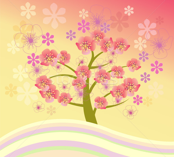 Сток-фото: изолированный · красивой · Cherry · Blossom · дерево · вектора · весны