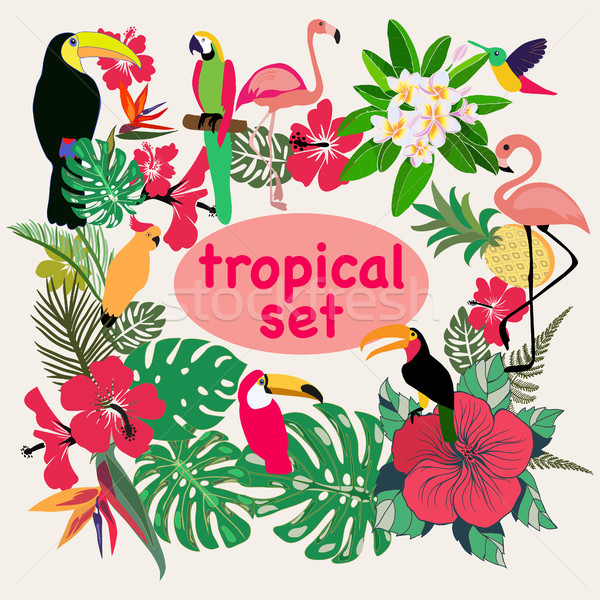 collection of tropical birds, palm leaves and flowers Stock photo © Margolana