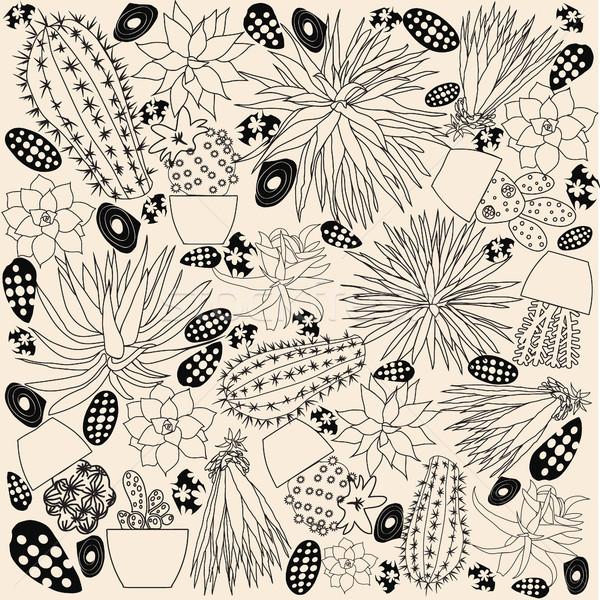 Firka rajz szett kaktusz rajz gyűjtemény Stock fotó © Margolana