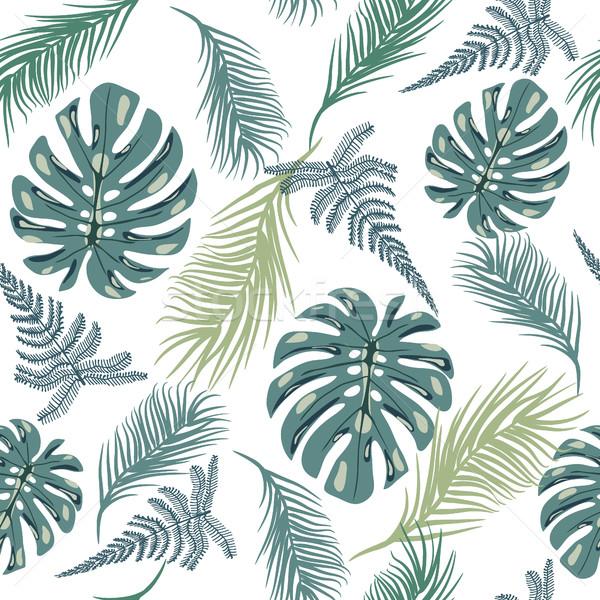 Tropikalnych modny egzotyczny roślin pozostawia Zdjęcia stock © Margolana