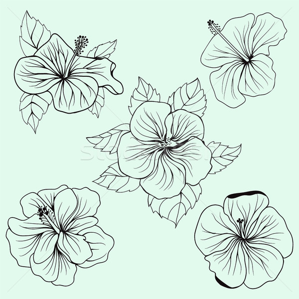Set of Hawaii hibiscus flower, leaf  Stock photo © Margolana