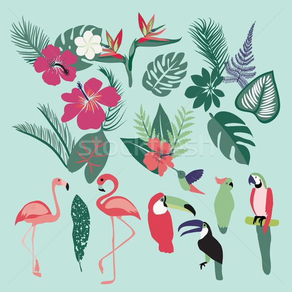 Stock photo: Palm leaves, tropical plants, flowers, leaves, birds, birds, fla