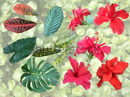 Ayarlamak tropikal bitki elemanları çiçekler yaprakları Stok fotoğraf © Margolana