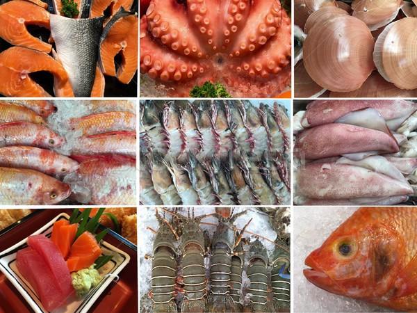 Coleção frutos do mar polvo camarão marisco conjunto Foto stock © Margolana